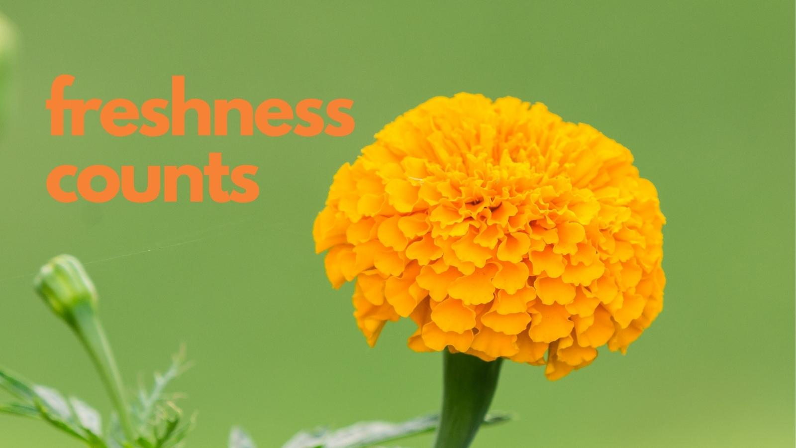 freshness counts on the blog