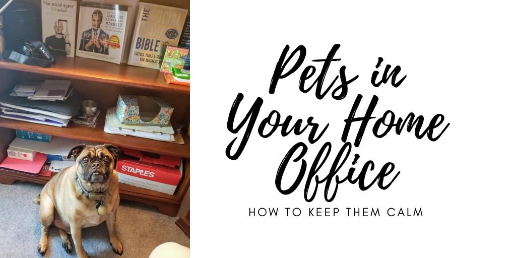 pets in your home office